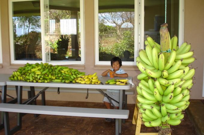 Help… I'm going Bananas!